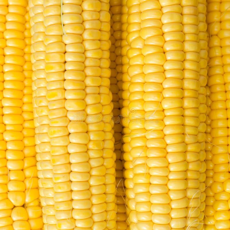Cereale maturo in una ciotola dell'argilla immagine stock