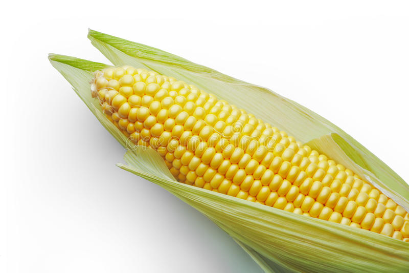 Cereale sulla pannocchia fotografia stock libera da diritti
