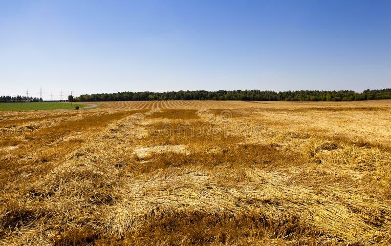 Cereales de la cosecha foto de archivo