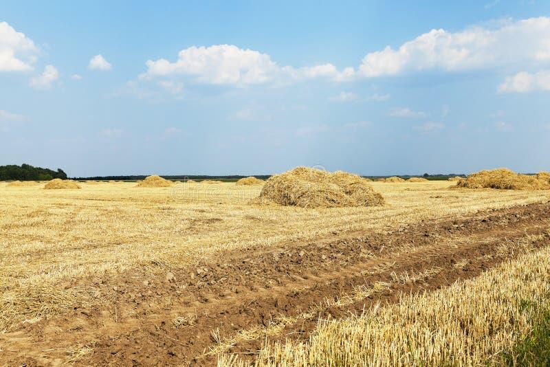 Cereales del campo de granja fotos de archivo libres de regalías