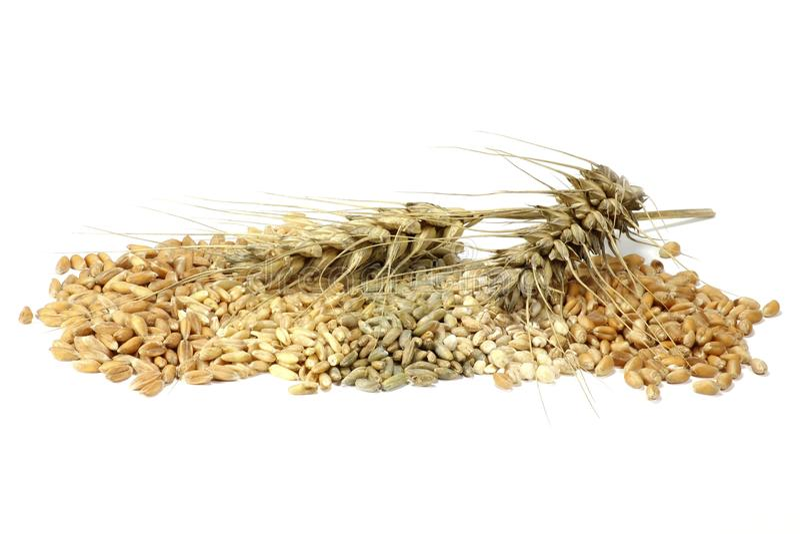 cereali fotografia stock
