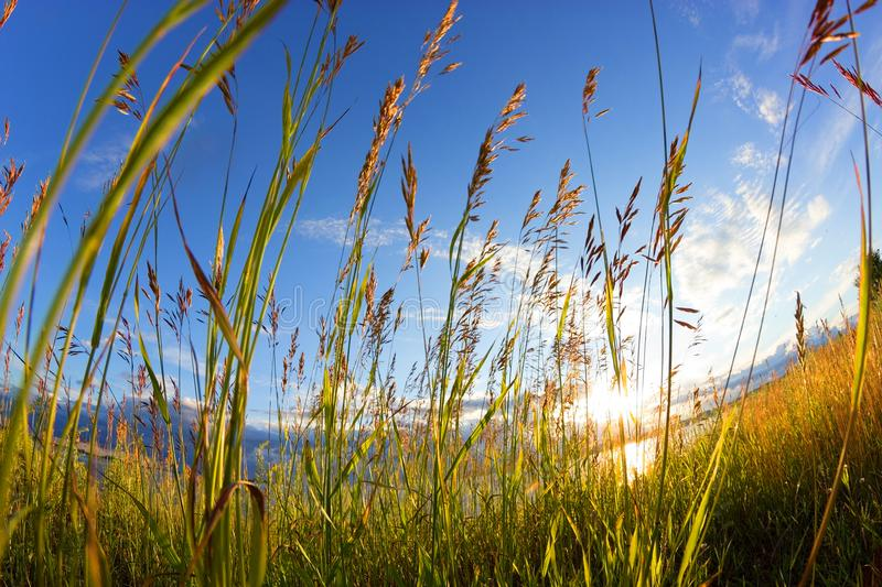 Cereals in a field stock images