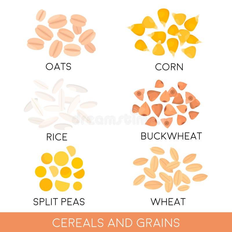 Cereals and grain, oats, rice, corn, split peas, wheat, buckwheat . Vector illustration stock illustration