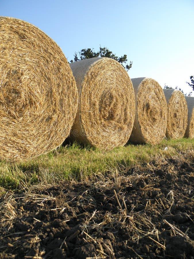 Cereals harvest