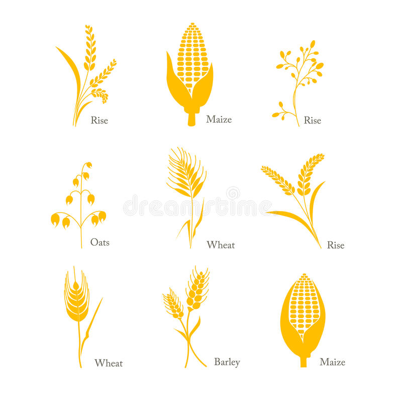 Cereals icon crop barley oats wheat rice maize complex stock illustration