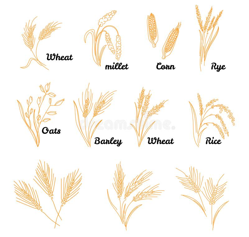 Free Cereals Icon Set With Rice. Hand Drawn Illustration Wheat, Rye, Oats, Barley, In Vintage Style. Stock Images - 153754614