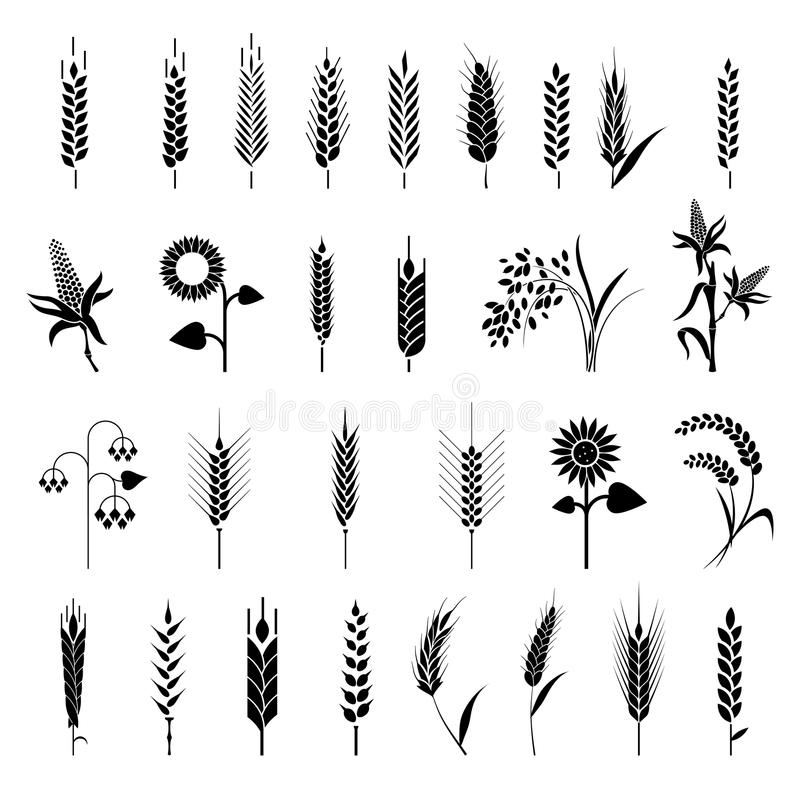 Free Cereals Icon Set With Rice, Wheat, Corn, Oats, Rye, Barley. Royalty Free Stock Image - 107802616