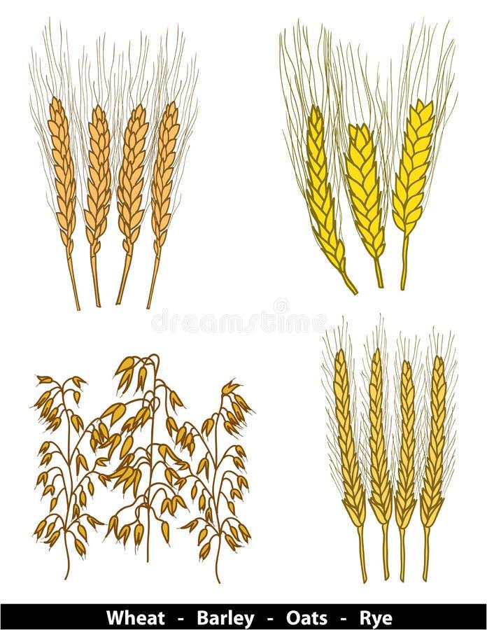 Download Cereals Illustration Stock Images - Image: 25377934