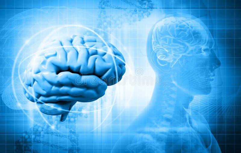 Cerebro ilustración del vector