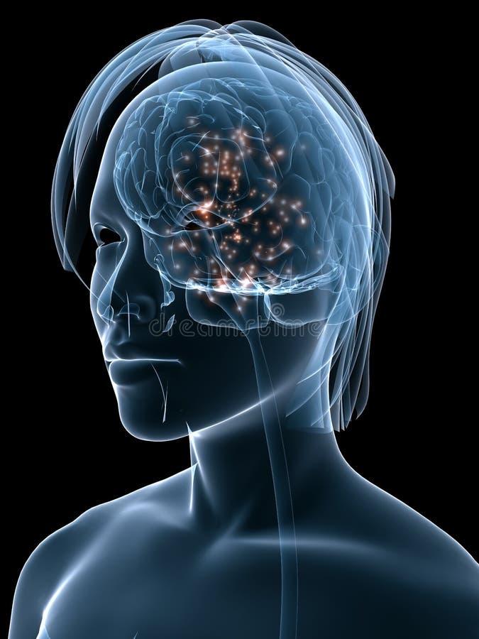 Cerebro activo humano libre illustration