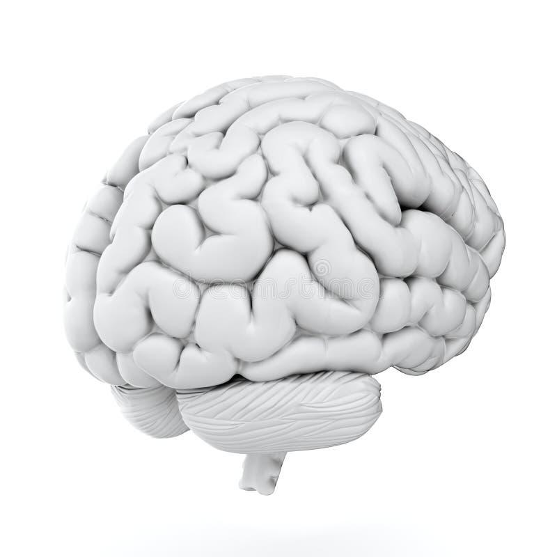 Cerebro blanco libre illustration