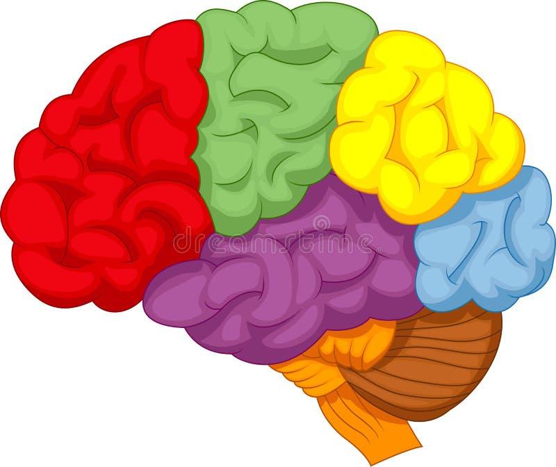 Cerebro colorido de la historieta ilustración del vector