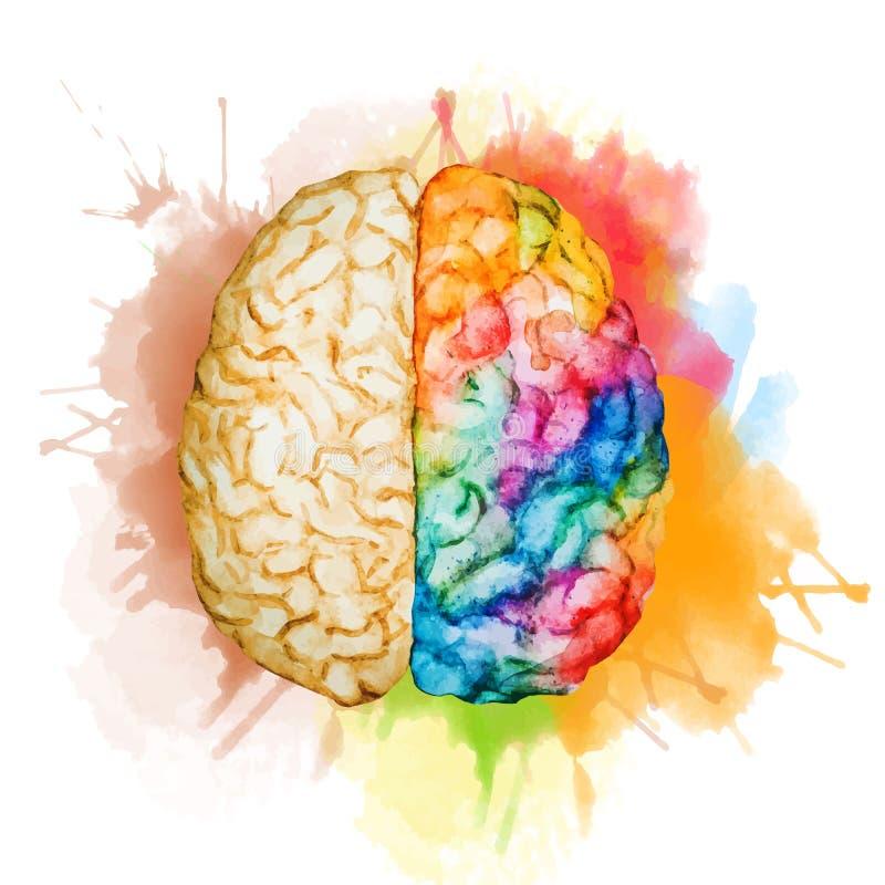 Cerebro de la acuarela stock de ilustración