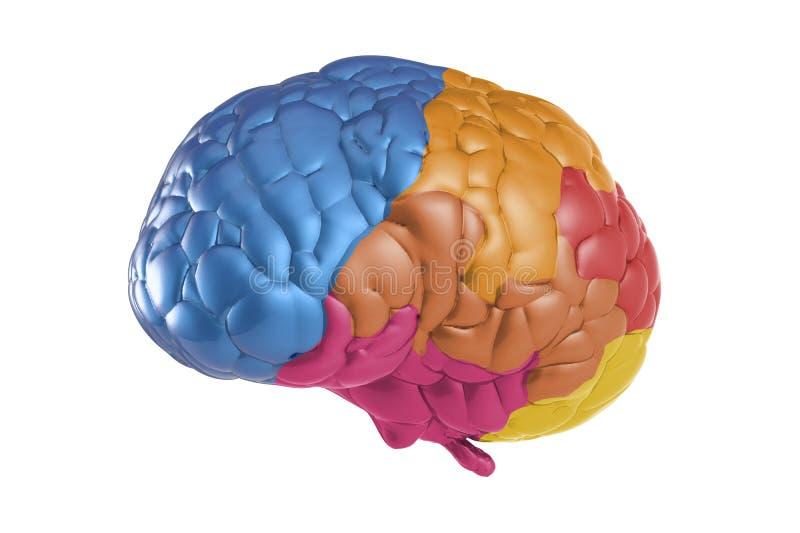 Cerebro de la creatividad stock de ilustración