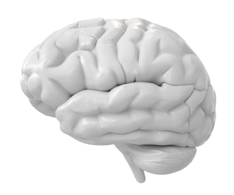 cerebro del blanco 3d stock de ilustración