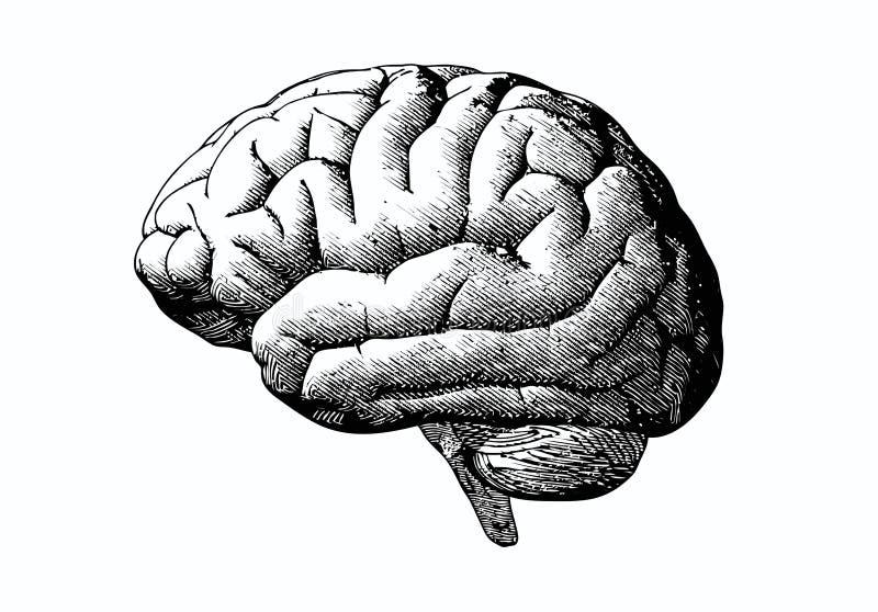 Cerebro del grabado con negro en BG blanca stock de ilustración