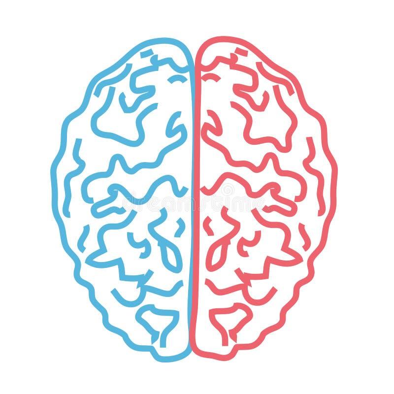 Cerebro en un fondo blanco Silueta linear de los dos hemisferios ilustración del vector
