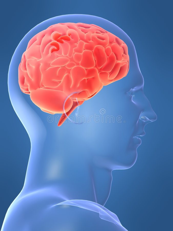 Cerebro humano libre illustration