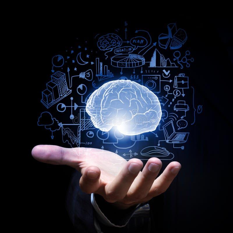 Cerebro humano foto de archivo libre de regalías