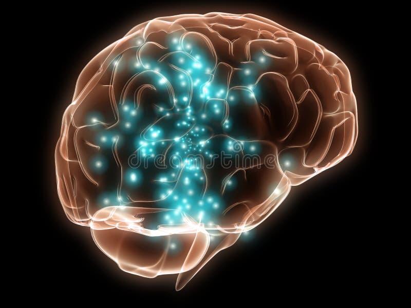 Cerebro humano activo stock de ilustración