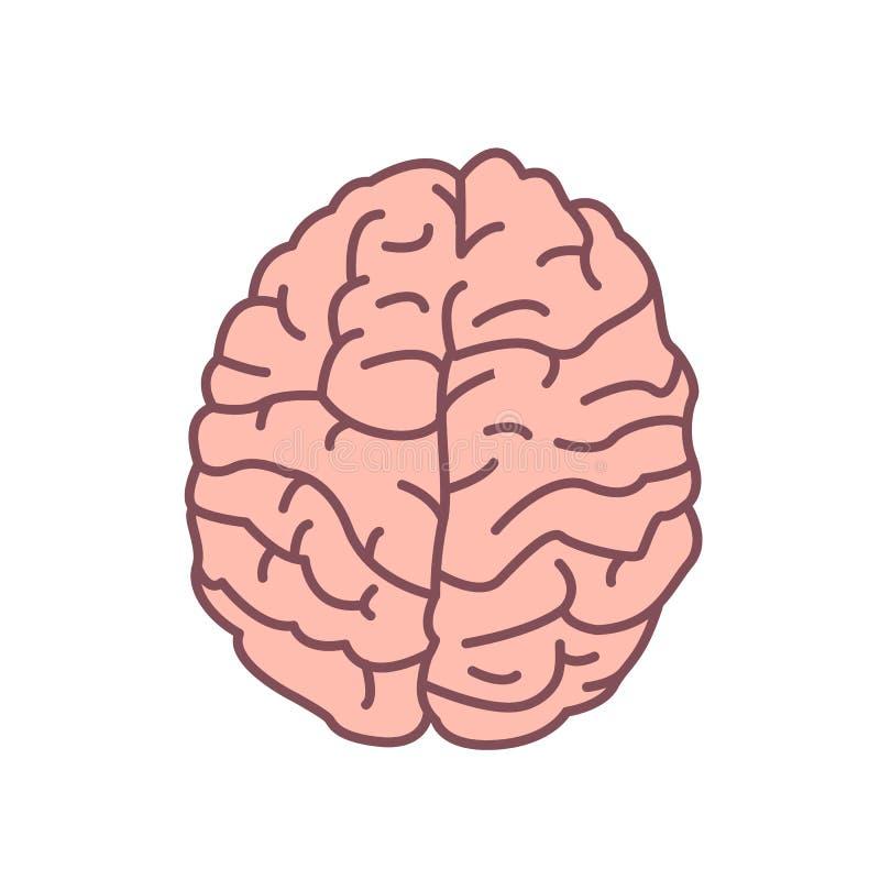 Cerebro humano aislado en el fondo blanco Órgano del sistema nervioso Símbolo de la inteligencia, mindfulness, cognición ilustración del vector