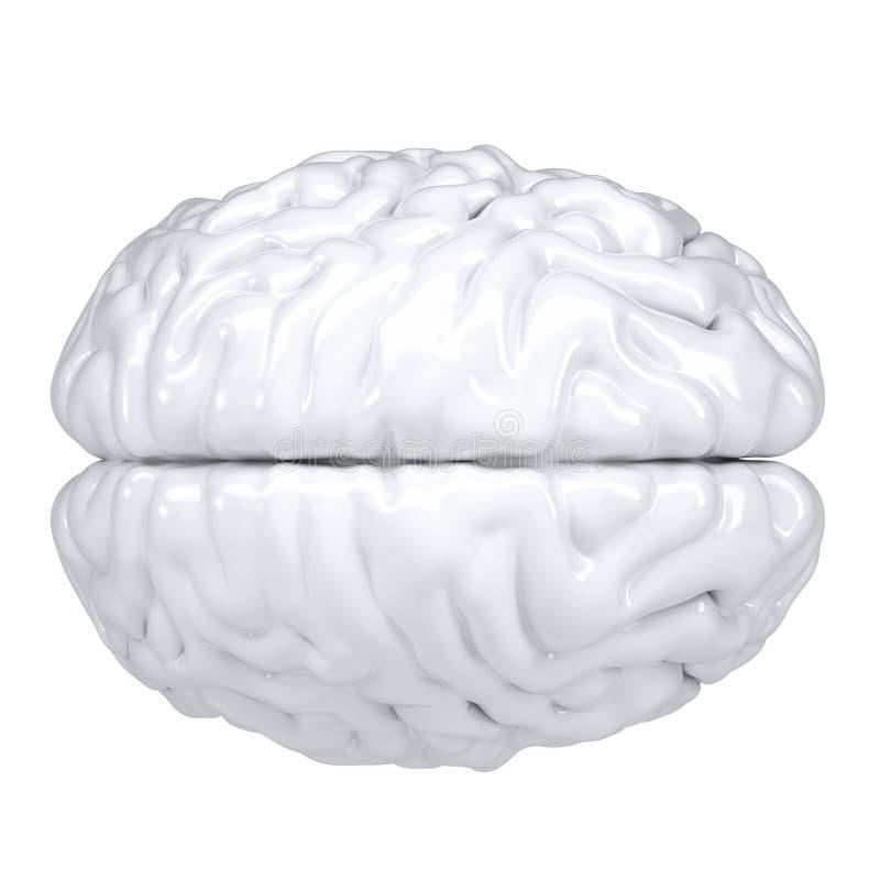 cerebro humano blanco 3d. Visión desde arriba libre illustration