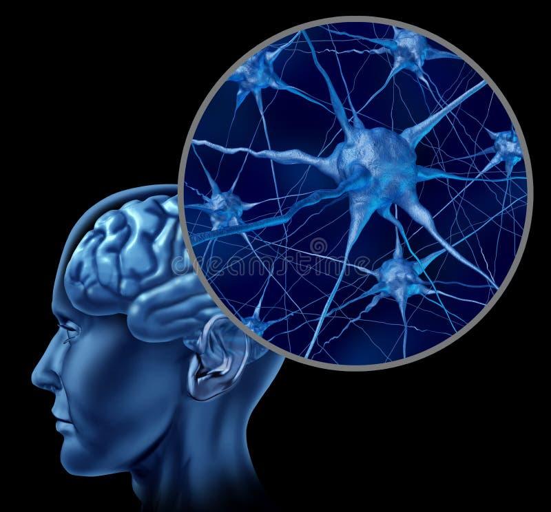 Cerebro humano con cierre para arriba de neuronas activas imagen de archivo libre de regalías