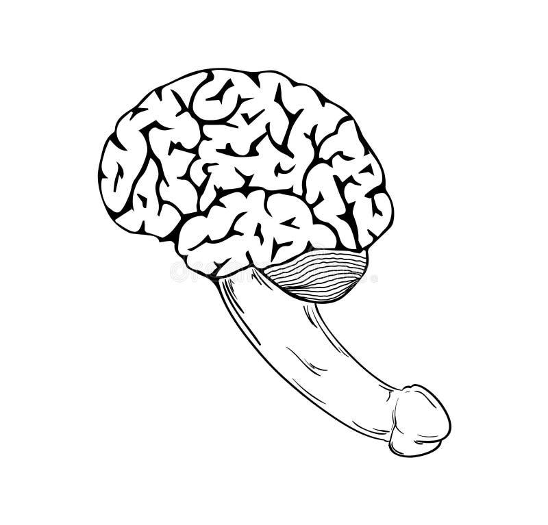 Cerebro humano con el pene ilustración del vector