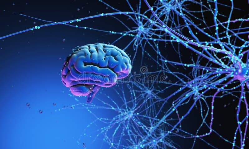 cerebro humano 3D fotos de archivo