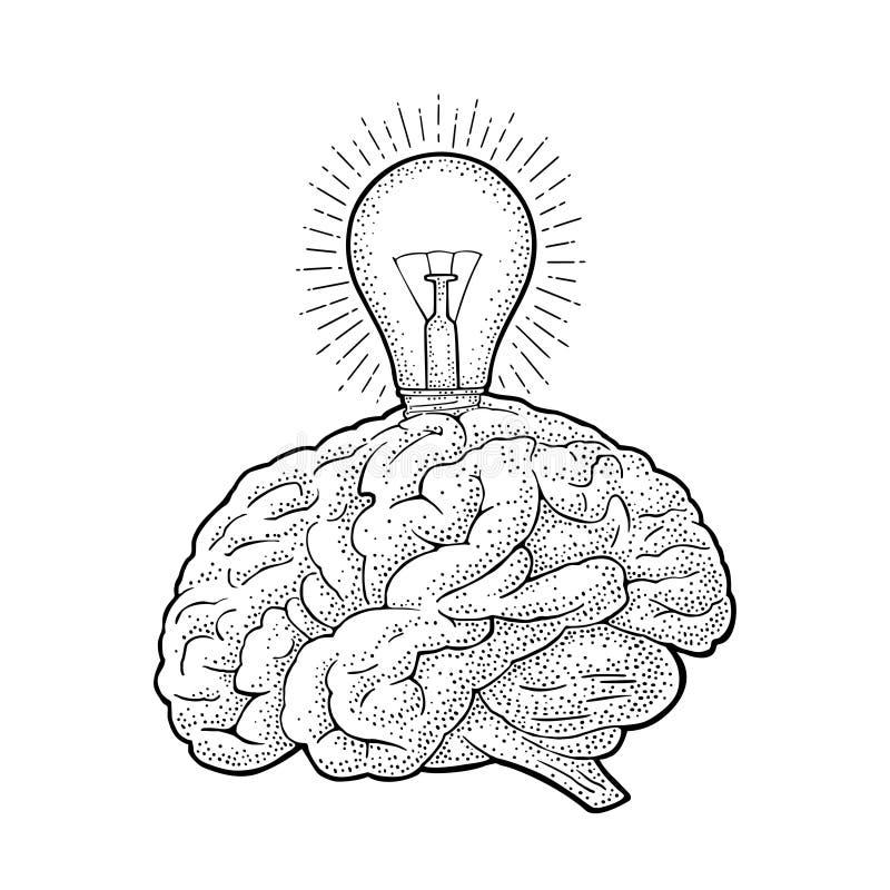 Cerebro humano de la anatomía y bulbo incandescente ligero que brilla intensamente Grabado del vector ilustración del vector