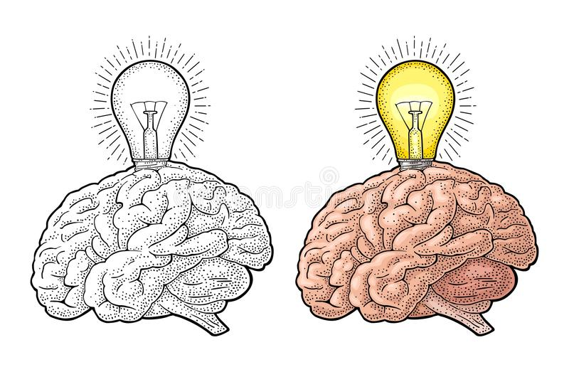 Cerebro humano de la anatomía y bulbo incandescente ligero que brilla intensamente Grabado del vector stock de ilustración
