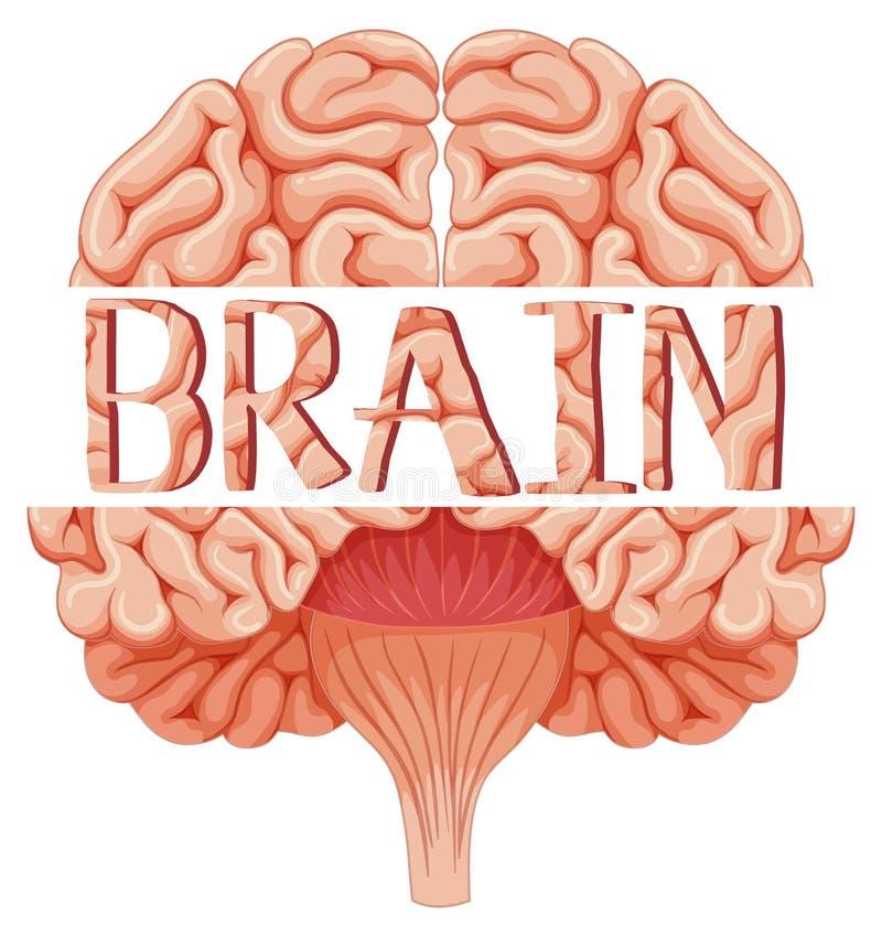 Cerebro humano en mirada más atenta libre illustration