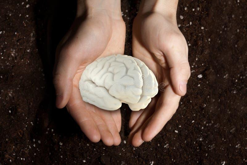 Cerebro humano en palmas fotos de archivo