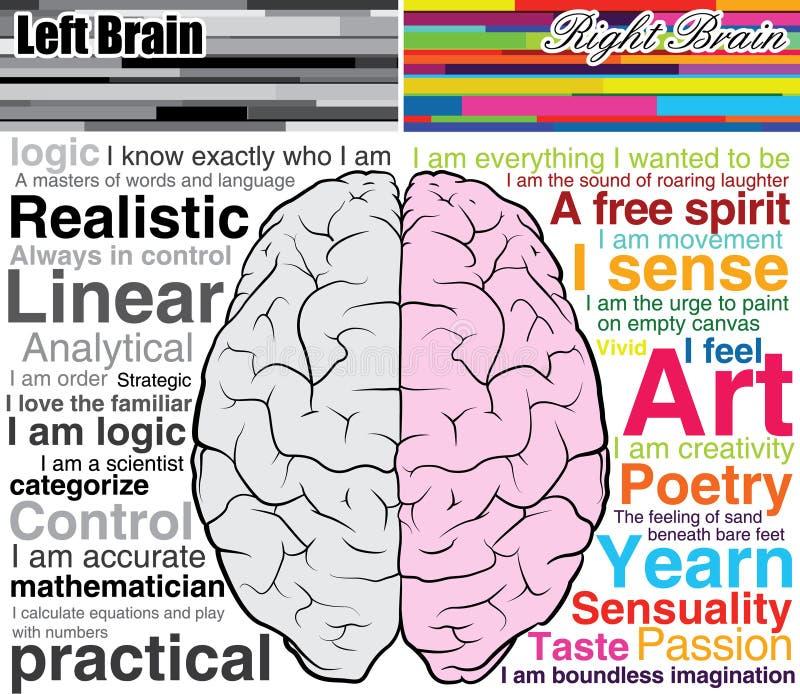 Cerebro humano izquierdo y derecho, cuáles usted es ilustración del vector