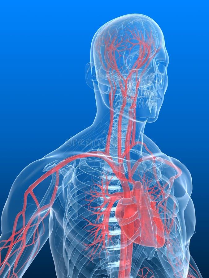 Cerebro humano y corazón ilustración del vector