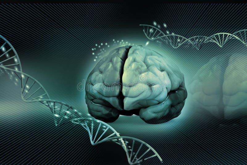 Cerebro humano y DNA stock de ilustración