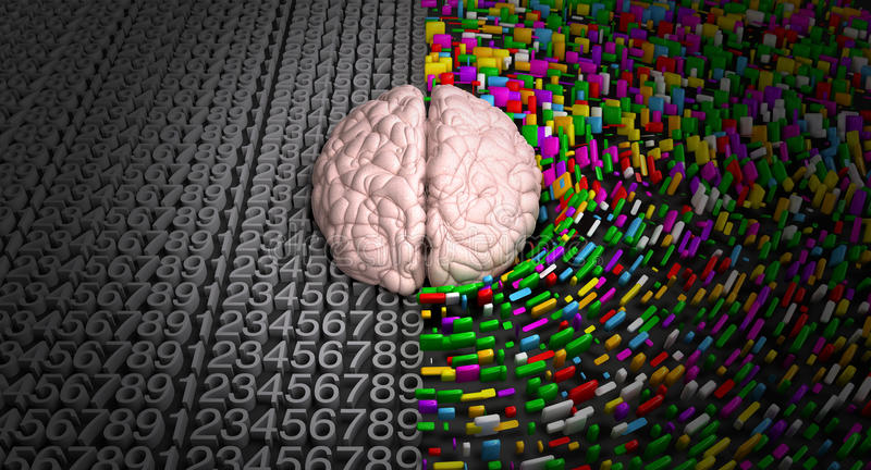 Cerebro izquierdo y cerebro derecho foto de archivo