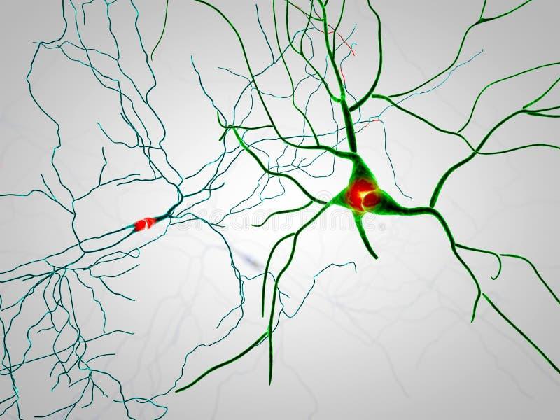 Cerebro, neuronas, sinapsis, red neuronal, enfermedades degenerativas, Parkinson ilustración del vector