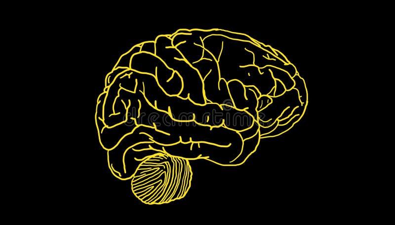 Cerebro simple stock de ilustración