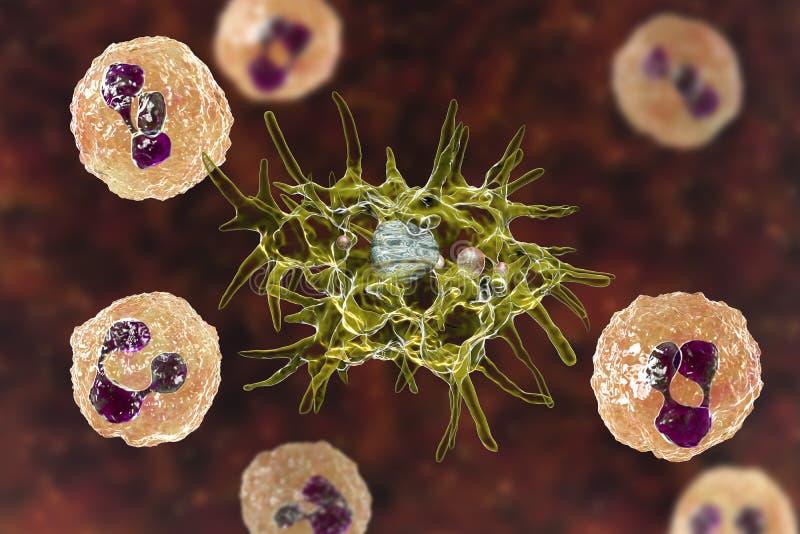 Cerebro-spinale vloeibare vlek die amoebe Acanthamoeba en neutrophils bevatten vector illustratie