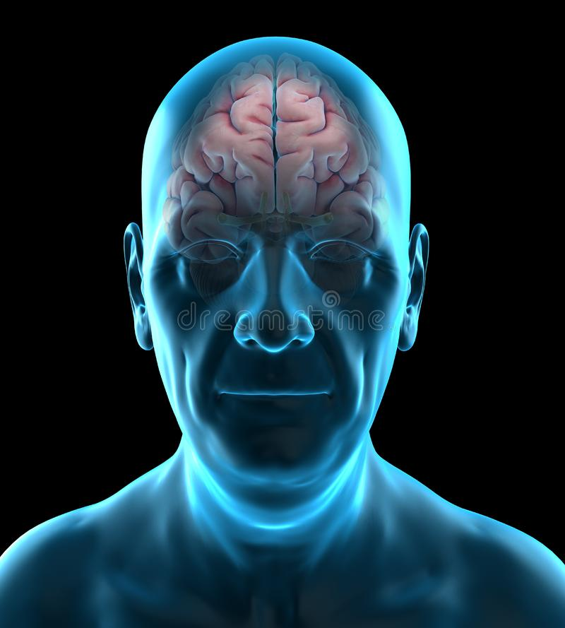 Cerebro viejo de los individuos ilustración del vector