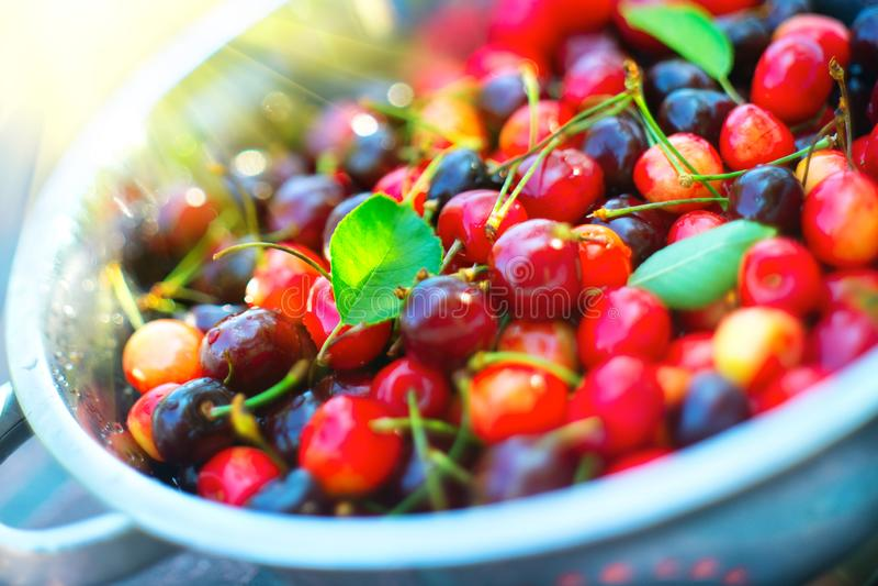 Cereja Close up maduro fresco das cerejas Fundo orgânico das bagas Jardinagem fotos de stock