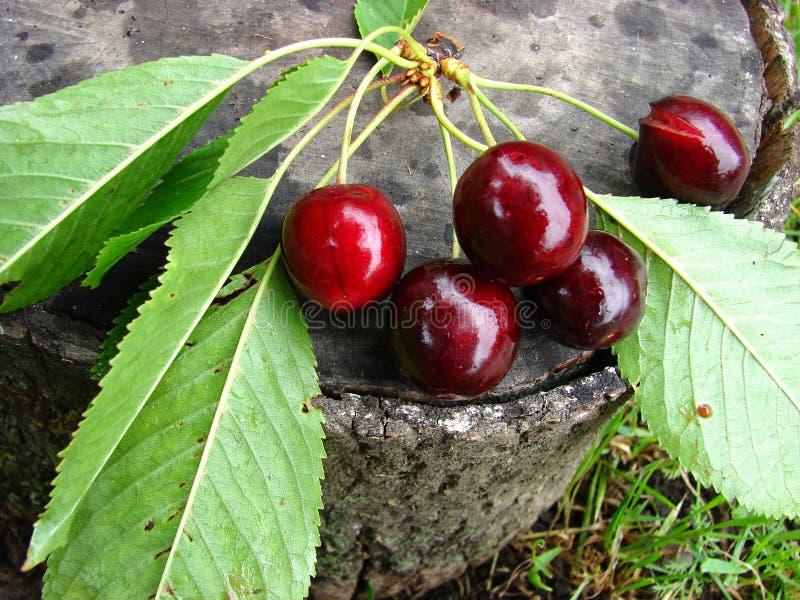 Cereja doce na madeira imagem de stock royalty free