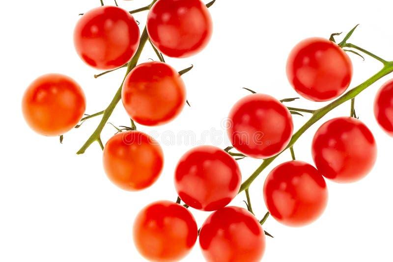 Cereja vermelha dos tomates maduros em vegetais brilhantes de um ramo verde em um close-up branco do fundo fotografia de stock royalty free