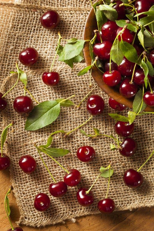 Cerejas ácidas orgânicas saudáveis imagem de stock royalty free