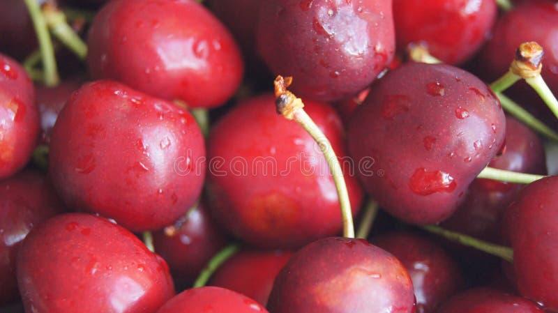 Cerejas vermelhas imagens de stock
