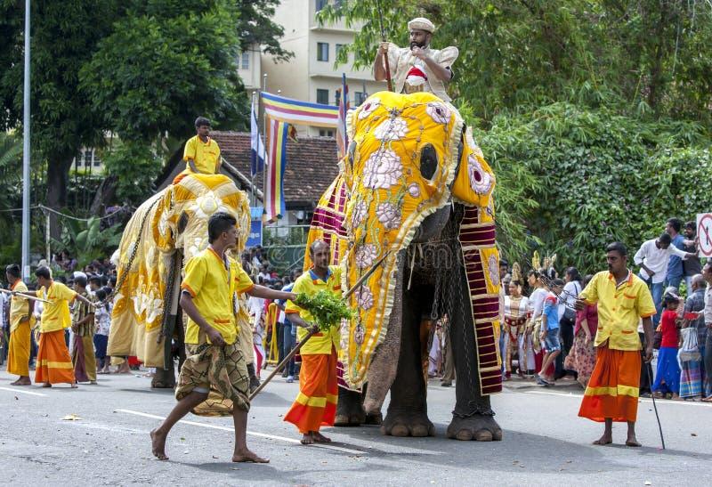 A ceremonial elephant at Kandy in Sri Lanka. royalty free stock photo