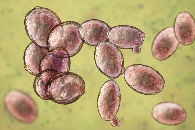 Cerevisiae ζύμη σακχαρομύκητας διανυσματική απεικόνιση
