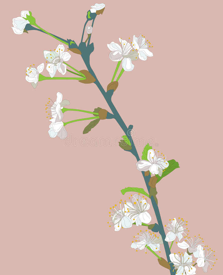 Cereza floreciente stock de ilustración