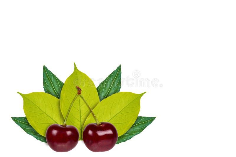 Cereza madura dulce en el fondo de hojas verdes Aislado en blanco noción del origen natural fotografía de archivo libre de regalías